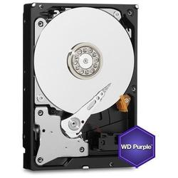 HDD 5TB Intelli WD Purple